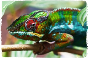 colorful_chameleon_by_aekschen-d4er5v0_Fotor